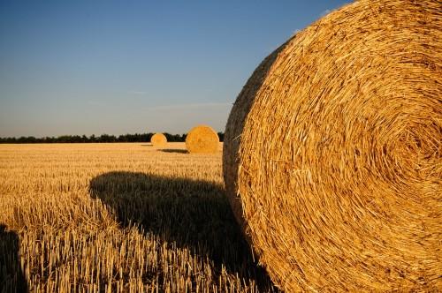 Kuri ir 100 vērtīgākie lauksaimniecības uzņēmumi?