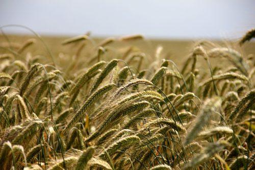 Zemgalē lielākos nodokļus valsts kopbudžetam nesuši tirgotāji un lauksaimnieki