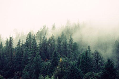 Puse no 100 lielākajiem mežu īpašniekiem – ārvalstnieki