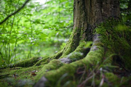 TOP 20 lielākie mežu īpašnieki